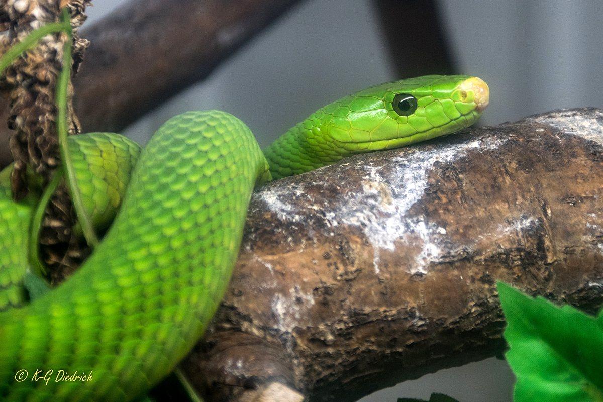 Schlangenfarm